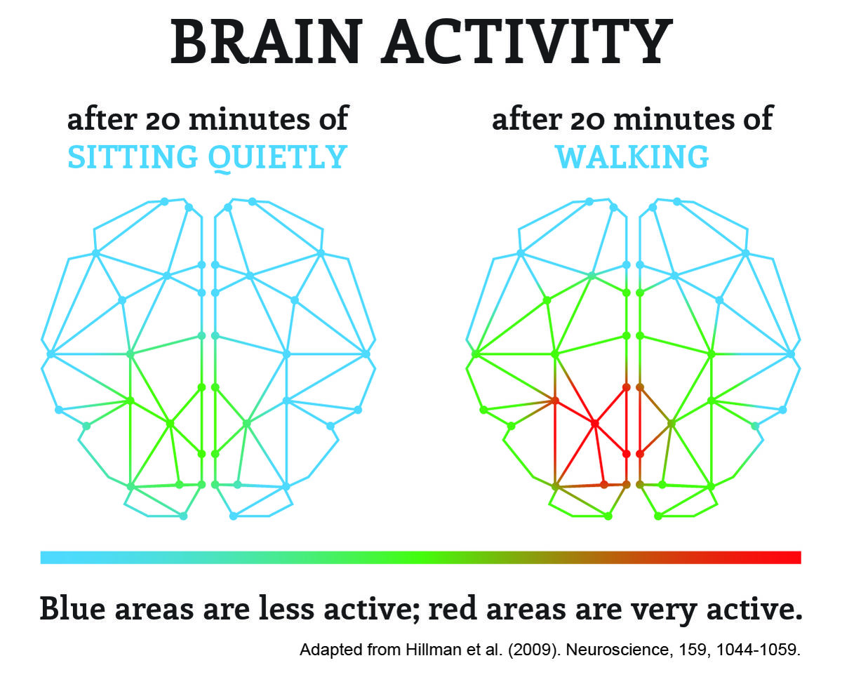 The brain is more active after walking for 20 minutes than sitting for 20 minutes.