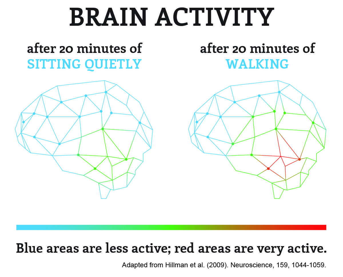 The brain is more active after walking for 20 minutes than sitting for 20 minutes